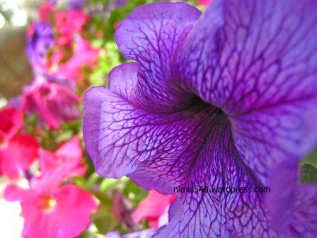 violet-ones2